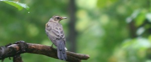 birdswatchingrain