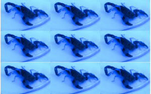scorpionEye